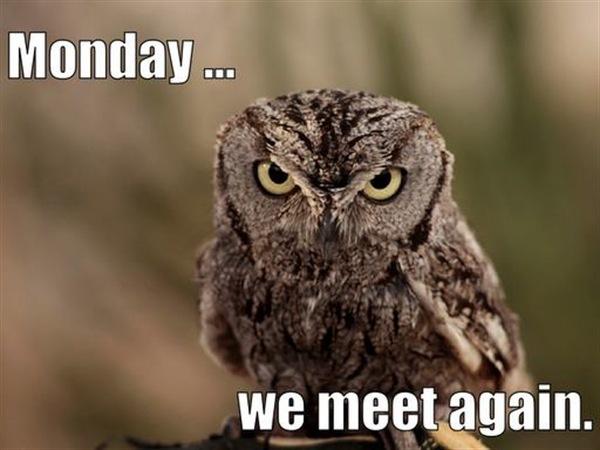 shall we meet on monday