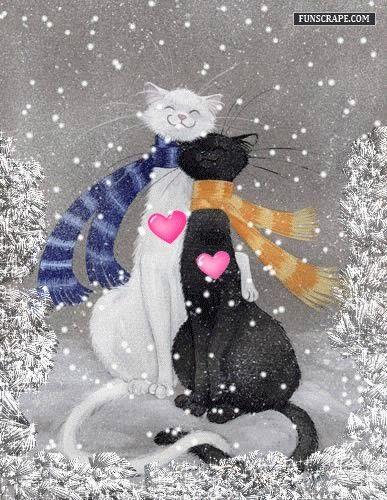 snowy love cats
