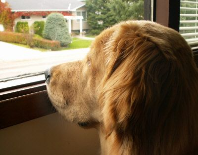 Miss our goldens...........