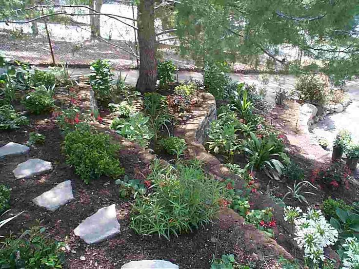 Garden Ideas Under Pine Trees : Beautiful shade garden plants gardening