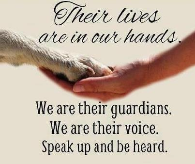 Their lives are in our hands