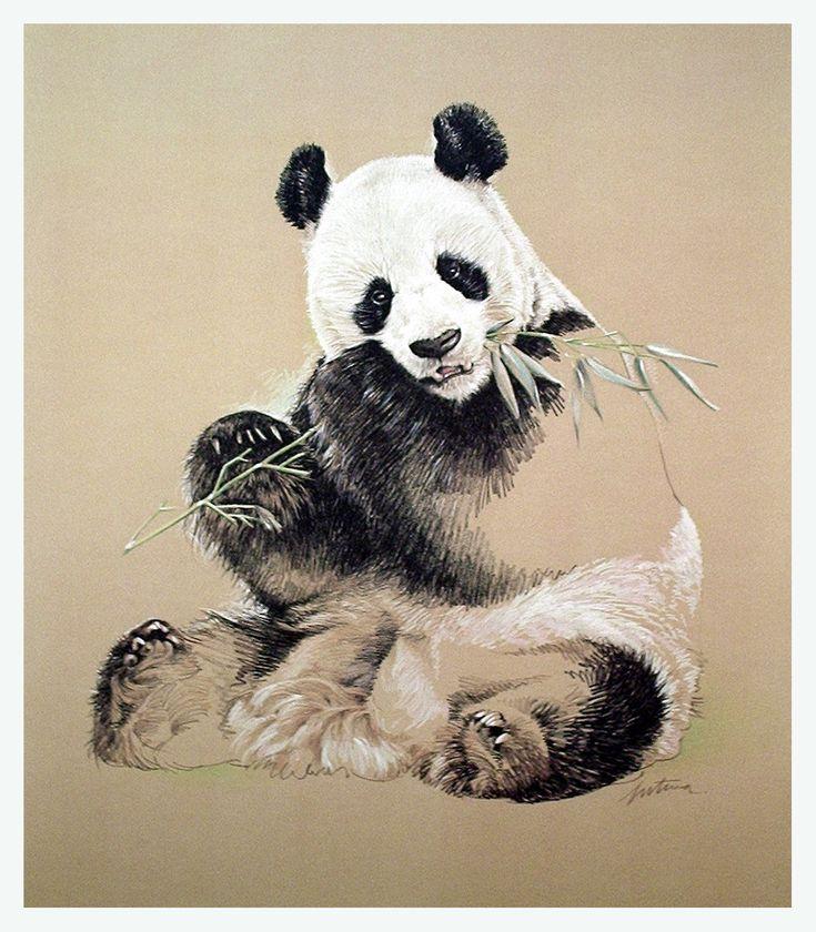 Panda DrawingPanda Drawing In Pencil