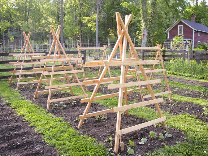Squash And Cucumber Trellises Vegetable Gardening