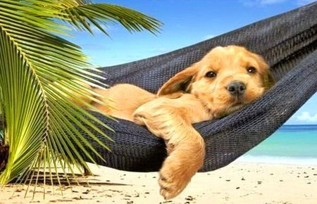 #13 Lazy summer day - awwwwww beach, green, hammock, ocean, palm, puppy, summer
