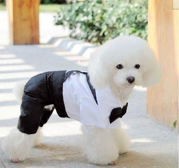 cute boy dog clothing 4 leg business suits pants 9 99