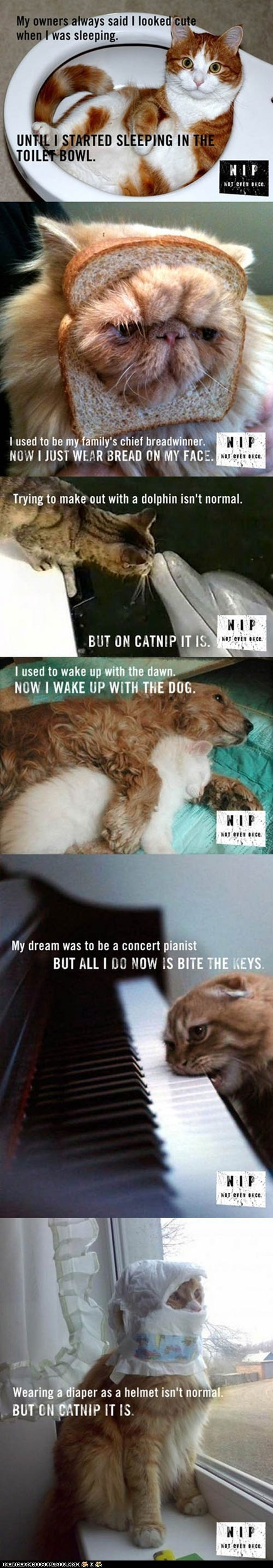 Catnip...not even once!