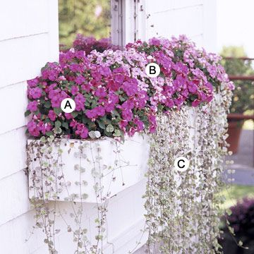 These look great out front. I wasn't able to find the Dichondra 'Silver Falls' but I used something close. 5/18/13  Maximize the Power of Pink  A. Impatiens 'Accent Pink' -- 4  B. Impatiens 'Pink Swirl' -- 4  C. Dichondra 'Silver Falls