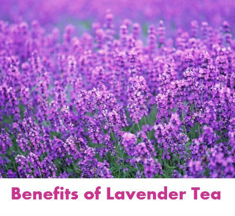 Pin by herb flower tea on herb flower teas pinterest for Can you get purple roses