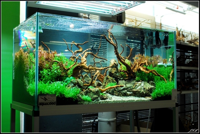 Layout by Ceed. #aquascaping AQUASCAPES-ETC.. Pinterest