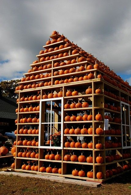 house of pumpkin..too cool!!