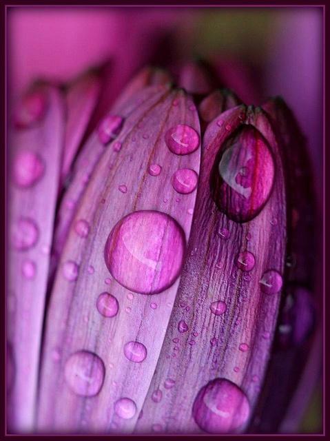 Purple drops  (puple rain?)