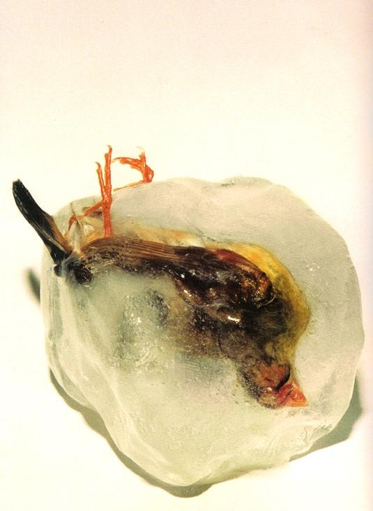 frozen finches (female). mat collishaw, 1994.