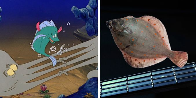 Real fish versus little mermaid fish for The little mermaid fish