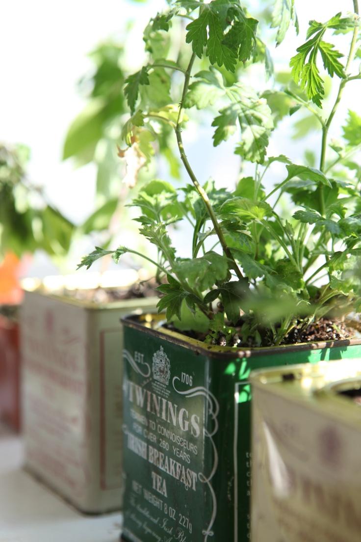 Anwar's Lovely Herb Garden!