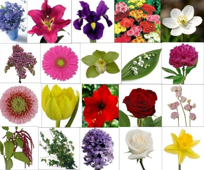 flower word list names and images