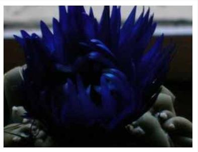 valentine's blues