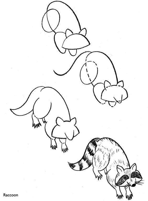 How to draw a raccoon. | simple shapes | Pinterest Raccoon Drawing Easy