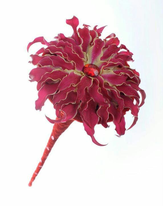 Modern lily glamellia