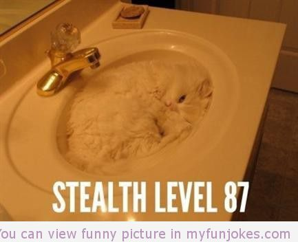 funny jokes stealth cat funny jokes one liners funny joke