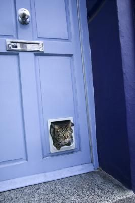 How to install a cat door in a hollow core door - Cat door for hollow core door ...