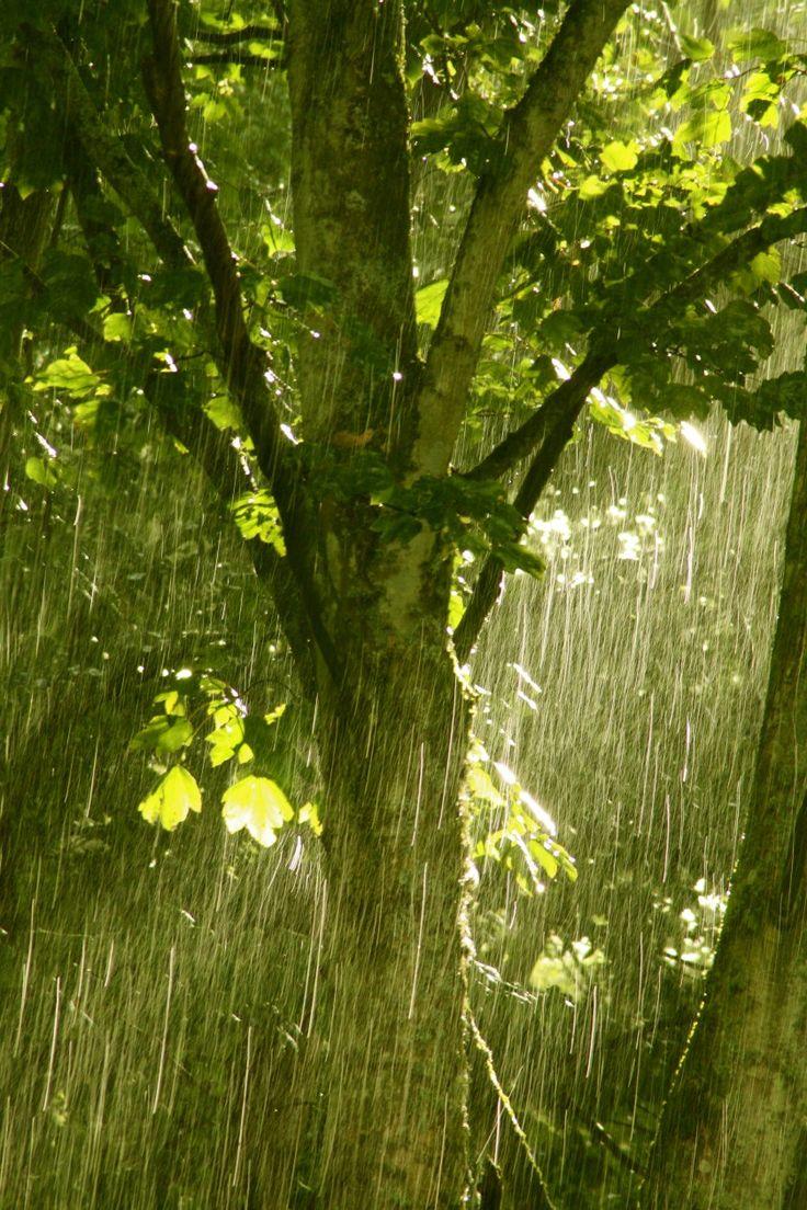 'Summer Rain' - Kate Reid | Fochabers Burn