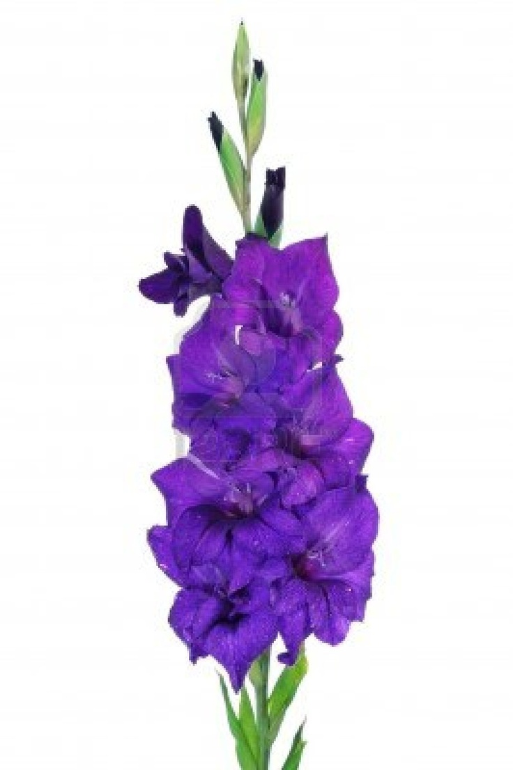 Purple gladious bouquet google search green