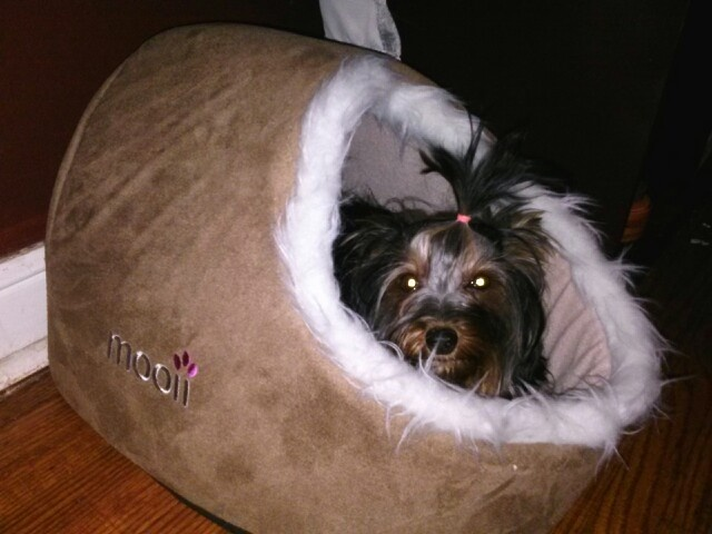 Yorkie Dog Bed