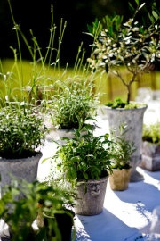 Edible table centerpiece: Potted herbs