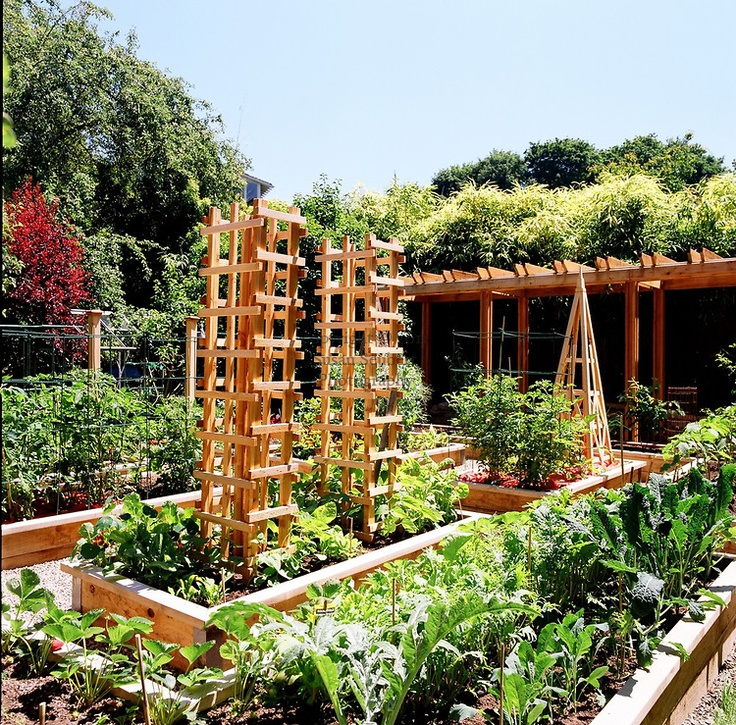 Pin by sonya esteves on yard gardening ideas pinterest for Summer vegetable garden
