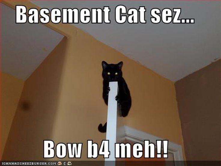 basement cat cats pinterest