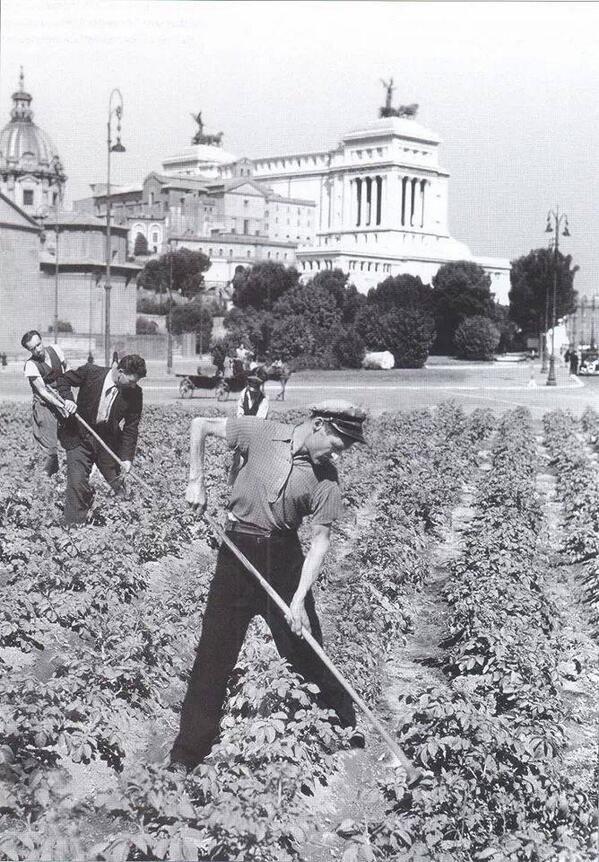 Wartime vegetable gardens, Rome, 1941   World Wars I & II   Pinterest