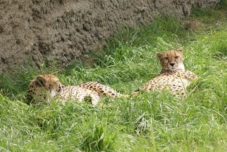 indianapolis zoo valentine's day