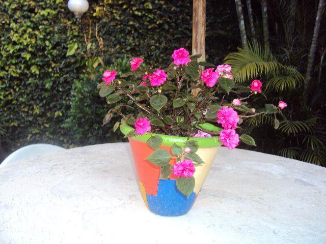 flores do meu jardim krafta:Flores do meu jardim