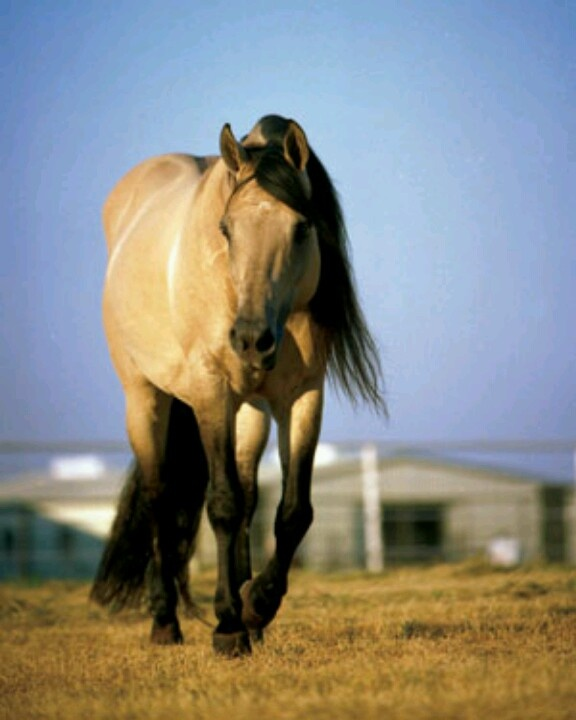 Hollywood Dun It | Horses! Horses! Horses! | Pinterest