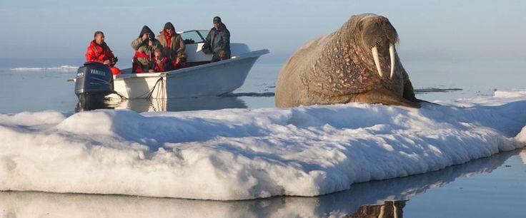nunavut arctic transportation company