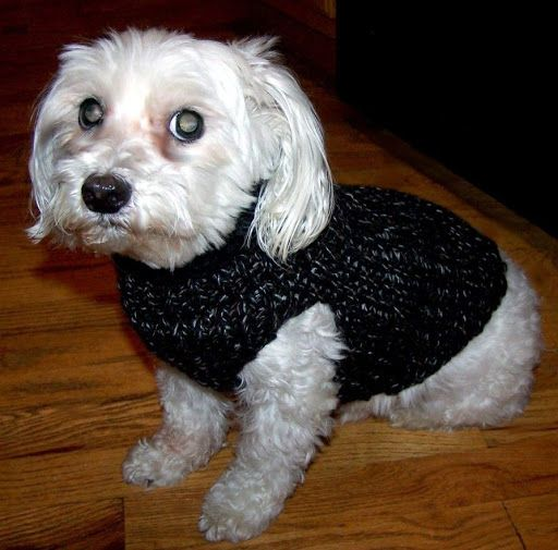 Dog Sweater Knitting Pattern For Maltese : doggy sweater pattern knifty knitter Loom knitting Pinterest