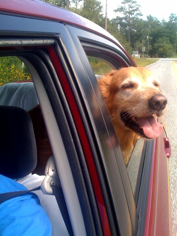 car window + dog = cute