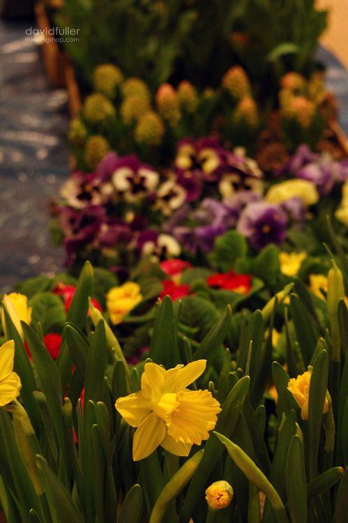 flowers boston uk