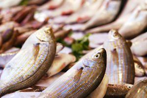 Sea Bass with Wine, Lemon & Garlic Sauce | Ah! Edibilicious! | Pinter ...