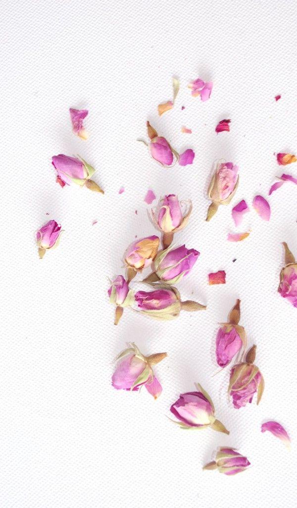 pinky roses petal