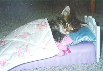 Cat sleeping in bed | ...tucked! | Pinterest