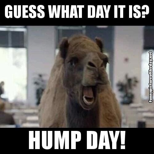 Guess What Day It Is Hump Day Funny Camel Geico Humor  funny!  Pinterest