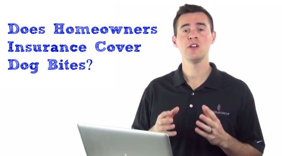 Does Home Insurance Cover Dog Bites From The Blog