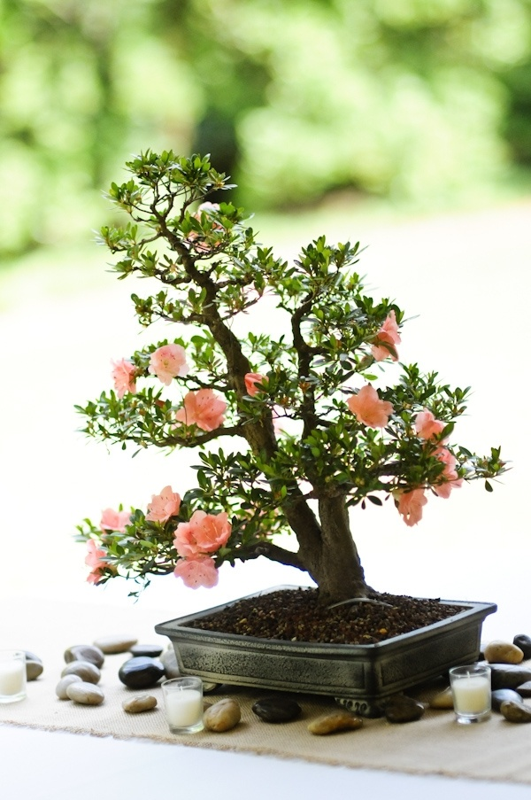 Bonsai tree wedding centerpiece wedding ideas - Mesas para bonsais ...