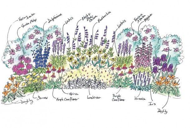 Mixed border garden garden pinterest for Perennial border design plans