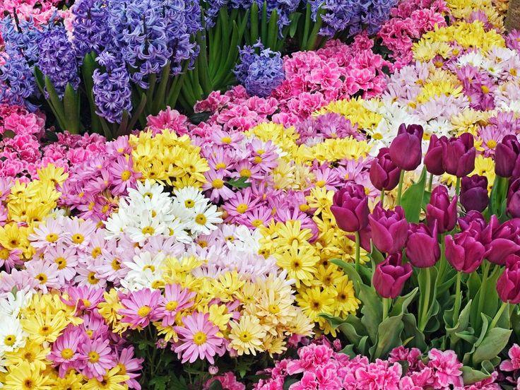 Beautiful flower garden flower garden posters buy a poster