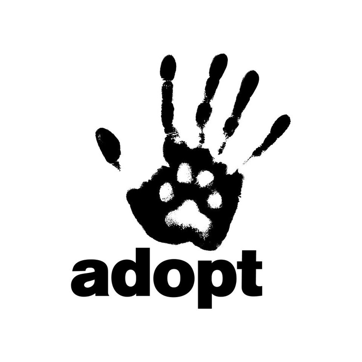adopt don t shop One of the most frustrating things to me is how there are a ton of dogs and cats in shelters, waiting to be adopted, and that people still go to pet stores instead to drop thousands of dollars on a dog my biggest problem with pet stores is that the dogs usually come from puppy.