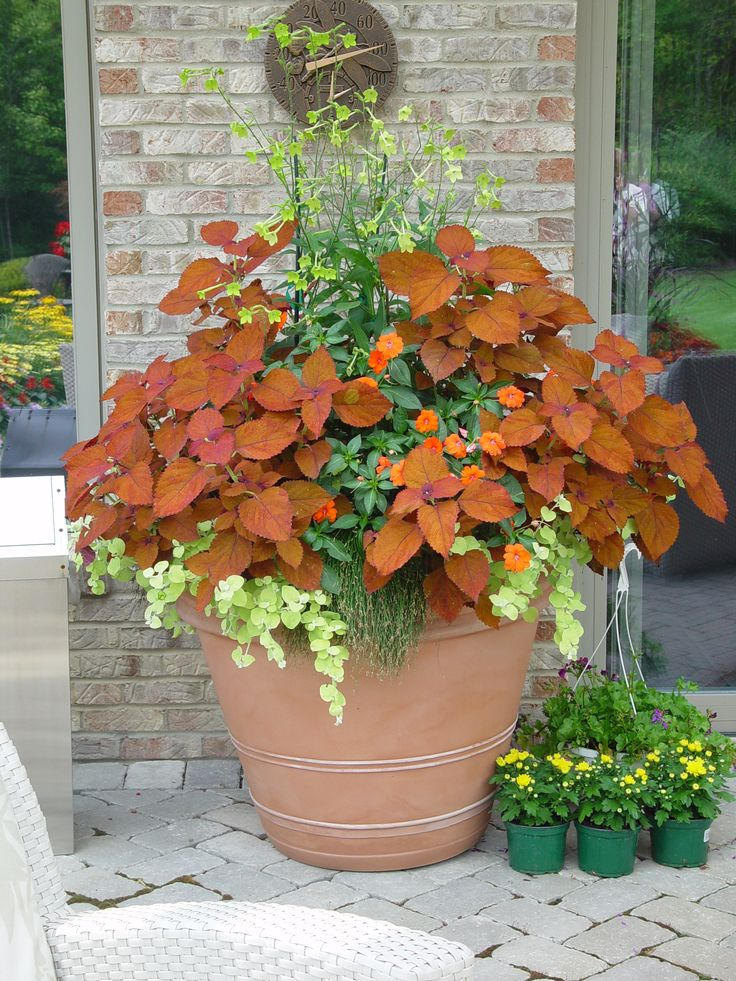 Coleus sedona container gardens planters pinterest for Container gardening