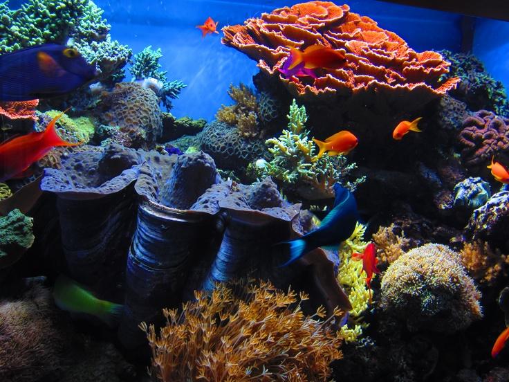 Aquarium Monterey Ca Pics I Take Pinterest