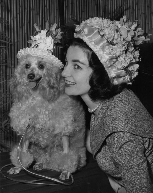The lady likes to match her poodle!